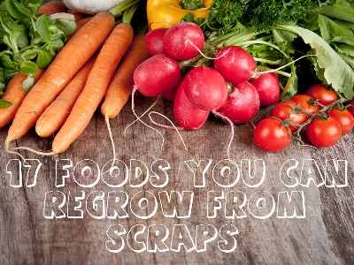 17 Foods You Can Grow From Kitchen Scraps 1