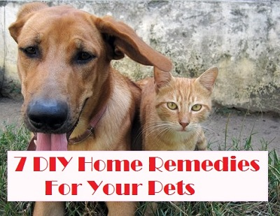 Amazing DIY Home Remedies For Pets-s