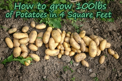 Grow Potatoes in 4 Square Feet 1