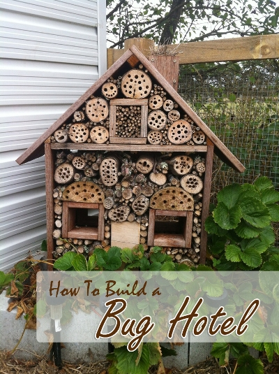 How to build a bug hotel for How to start building a house