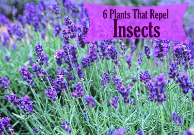 Plants That Repel Insects 1