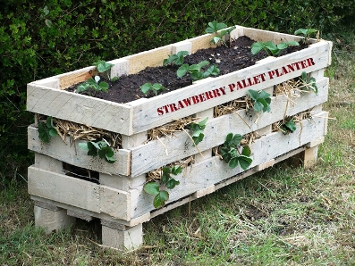 Strawberry Pallet Planter 1