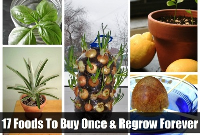 17 Foods To Buy Once And Regrow Forever 1