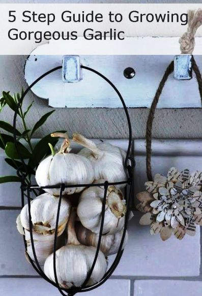 5 Step Guide To Growing Gorgeous Garlic