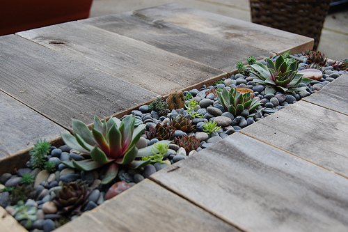 DIY Succulent Table