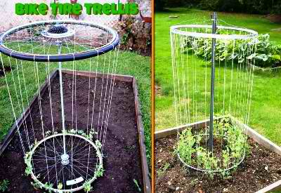 DIY Bike Rim Trellis For The Garden