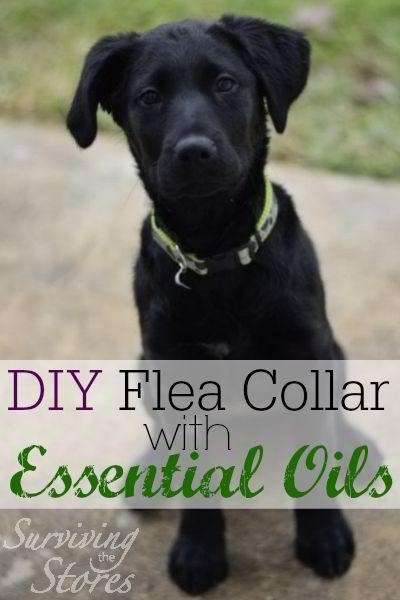 DIY Flea Collar Using Essential Oils
