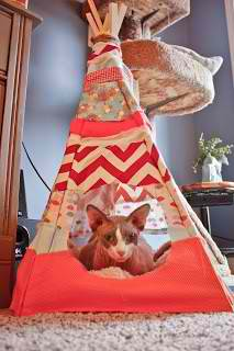 How to Make a Cat Teepee