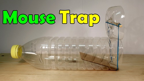 Plastic Bottle Mousetrap